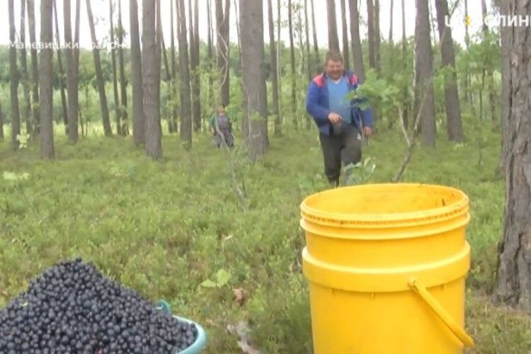 Жителів Полісся пускатимуть у Білорусь по ягоди та гриби