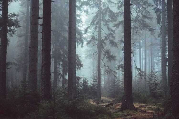 У волинському лісі з'являються перші гриби (Фото)