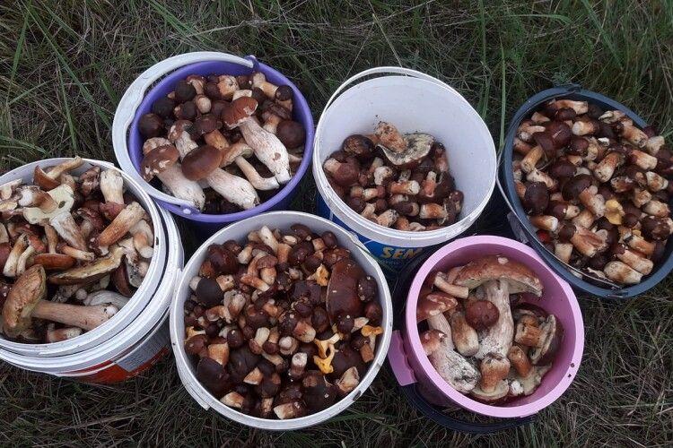 Шість відер грибів стали жертвами озброєного ножем волинянина