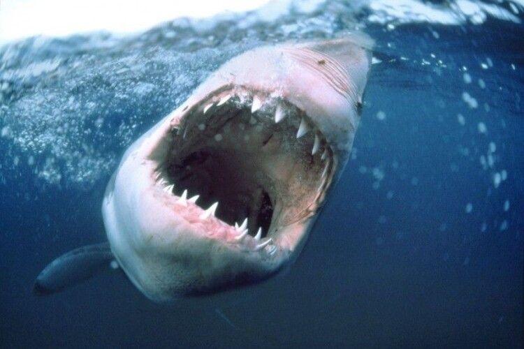 Акула відкусила руку 12-річному українцеві в Єгипті
