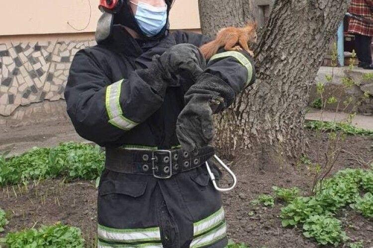 Бійці ДСНС врятували білочку