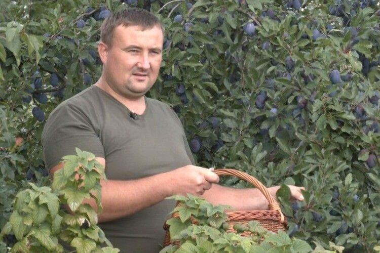 На Горохівщині в унікальному саду сім'я вирощує сотні сортів фруктів і горіхів (Відео)