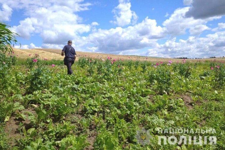 Поліція влаштовує облави на макові та копопляні плантації жителів Рівненщини (Фото)