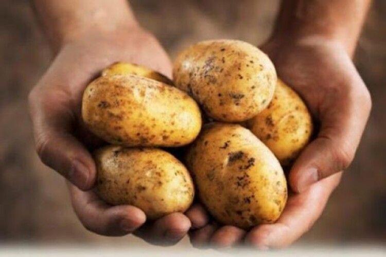 На Рівненщині пенсіонер під час копання картоплі втратив руку