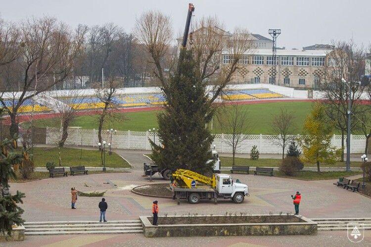 У Нововолинську святкова ялинка постоїть без прикрас (Фото)