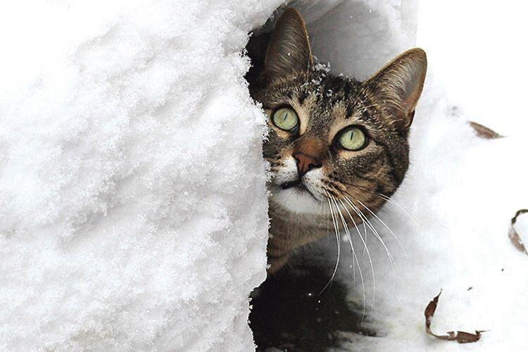 Прогноз волинського синоптика: зима цьогоріч поборюкається  ще навіть із березнем