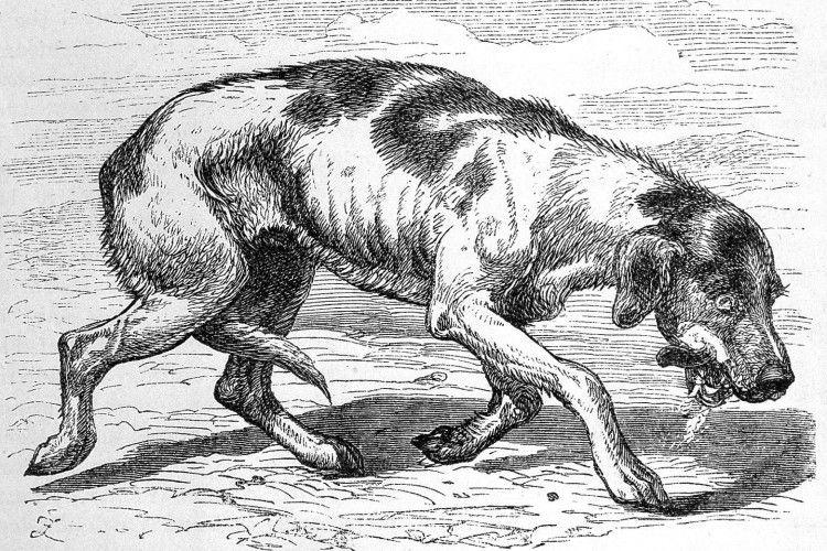 Скажений собака налякав селян на Рівненщині