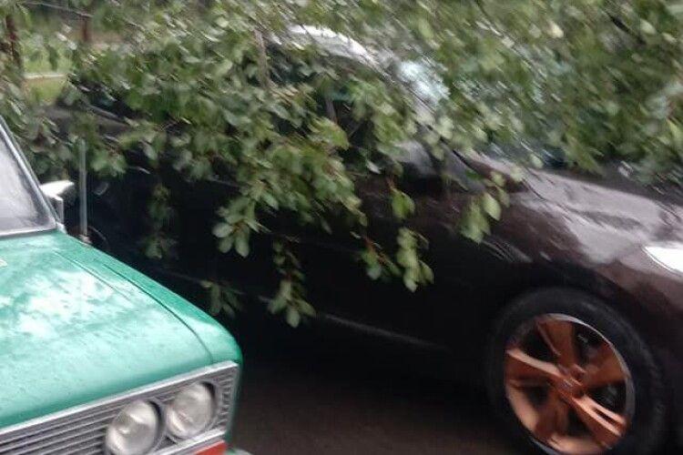У Луцьку вітер повалив дерево на припарковане авто (Фото)