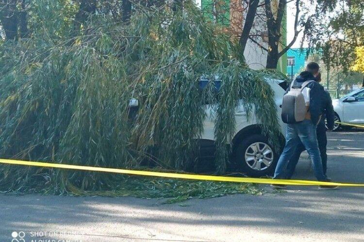 У Луцьку біля школи дерево впало на дві машини (Фото)