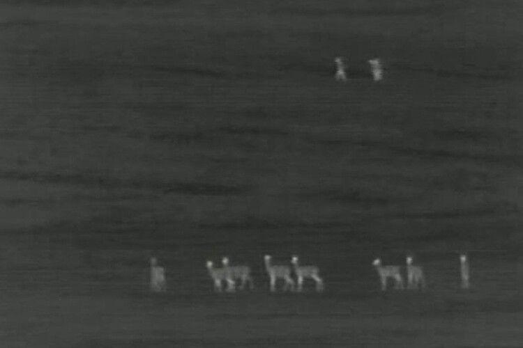 Як на західному кордоні ловили нелегалів (Відео)