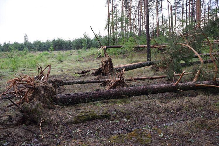 Від буревію постраждали і ліс, і людські городи