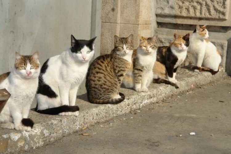Безхатніх луцьких котів міськрада визнала корінними жителями міста і зобов'язала їх ловити мишей на горищах та у підвалах