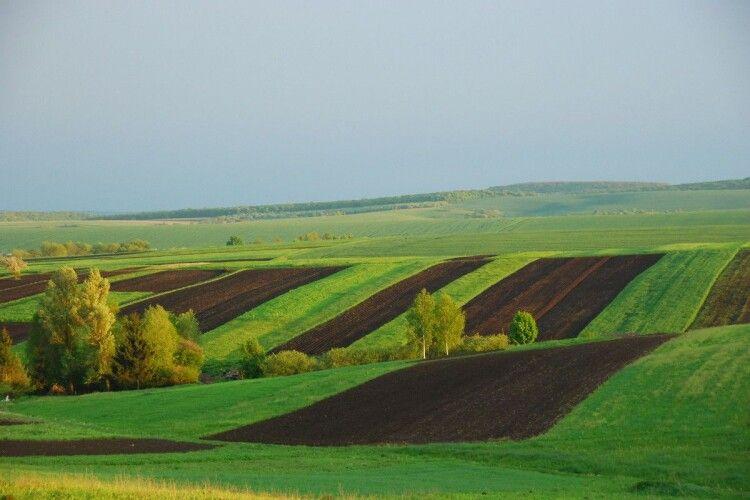 Волинським громадам передадуть сільськогосподарські землі