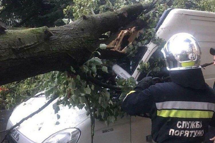 Через негоду в Рівному дерево привалило буса (Фото)