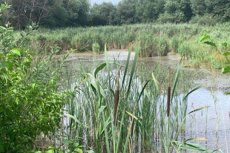 У Рівному серед болота застрягла такса (Фото)