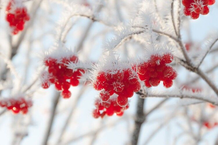Погода на неділю, 7 січня: білі мухи нещадно атакують Волинь