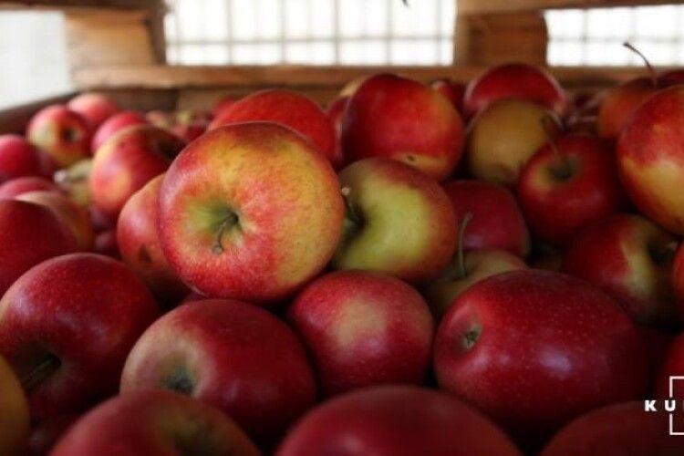 В Україні карколомно дешевшають яблука
