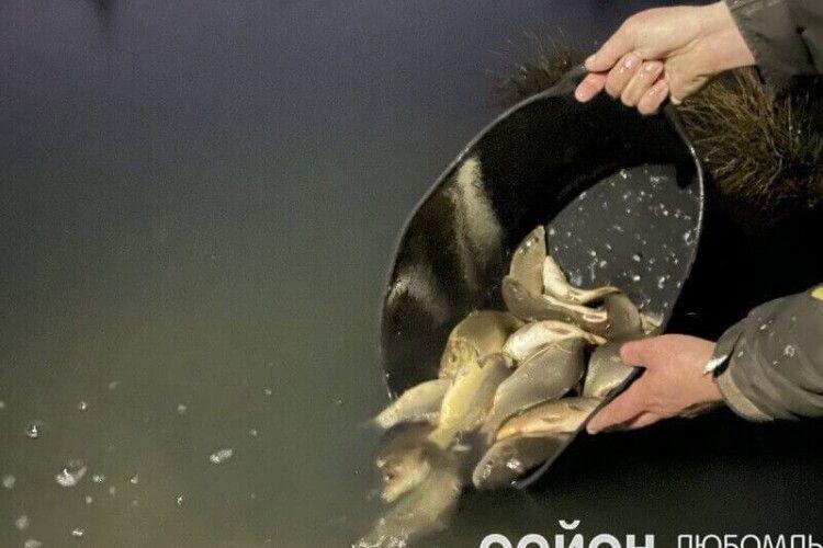 Як на Волині зарибнювали водойми (Фото. Відео)