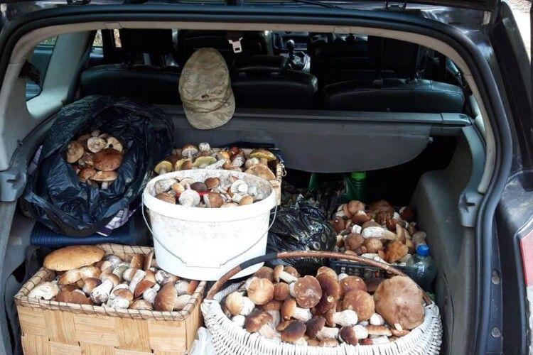 Волинянка по самісіньку зав'язку напхала багажник грибами