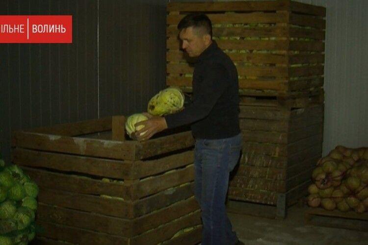 Волинський фермер викинув десятки тонн овочів, які зіпсувалися за час карантину (Відео)
