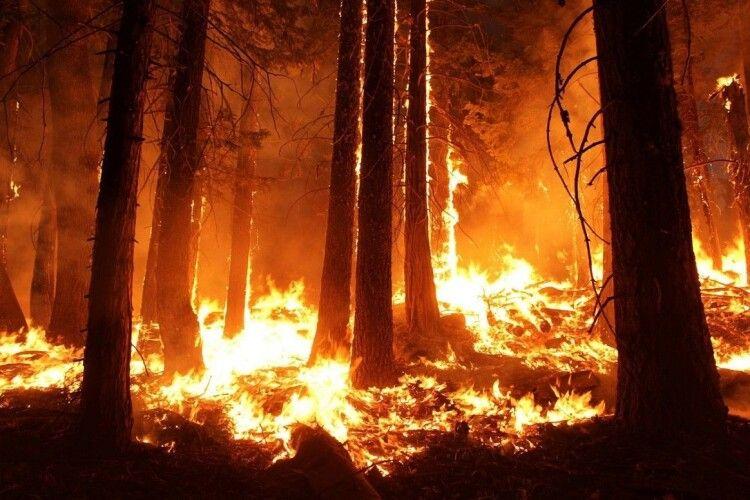 Горять 400 гектарів лісу: Зеленський зібрав термінову нараду (Відео)