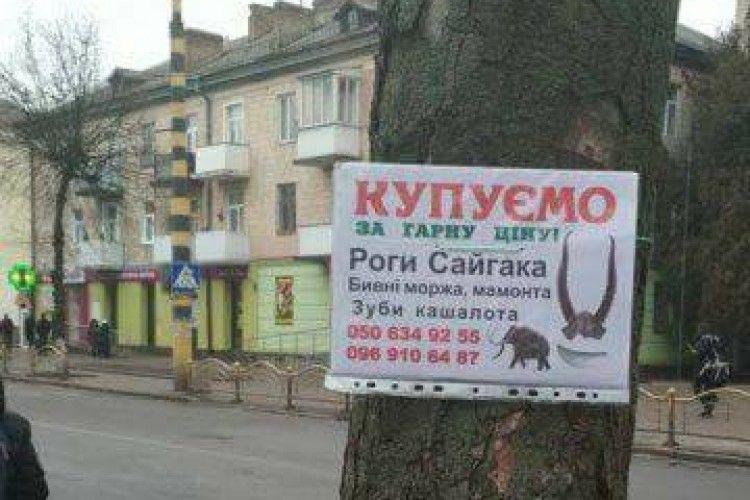 У Луцьку продавали наркотики – під приводом… купівлі бивнів мамонта та зубів кашалота