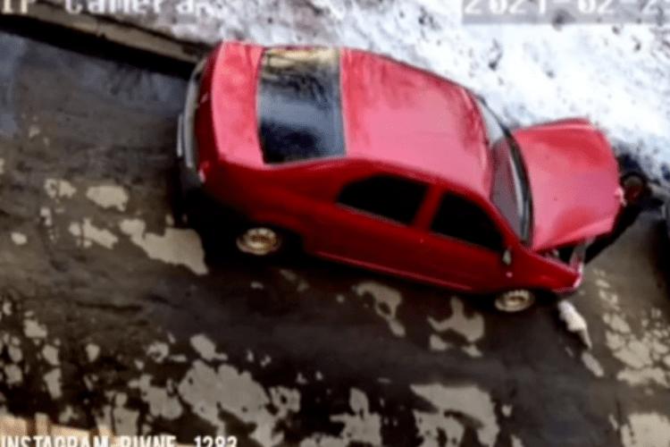 Рівнянин пів дня возив під капотом кота (Відео)