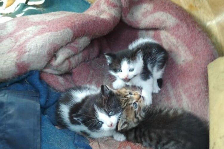 У Луцьку троє кошенят чекають на Великоднє диво