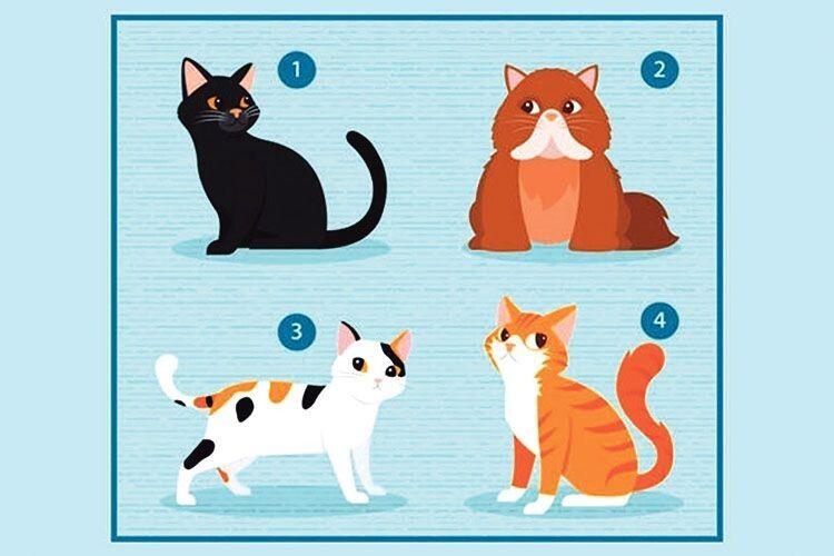 Аби дізнатись, що вам потрібно в стосунках, виберіть… кота