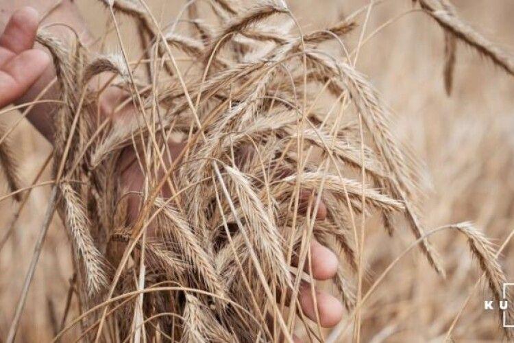 Поліщуків закликають робити ставку на озиме жито