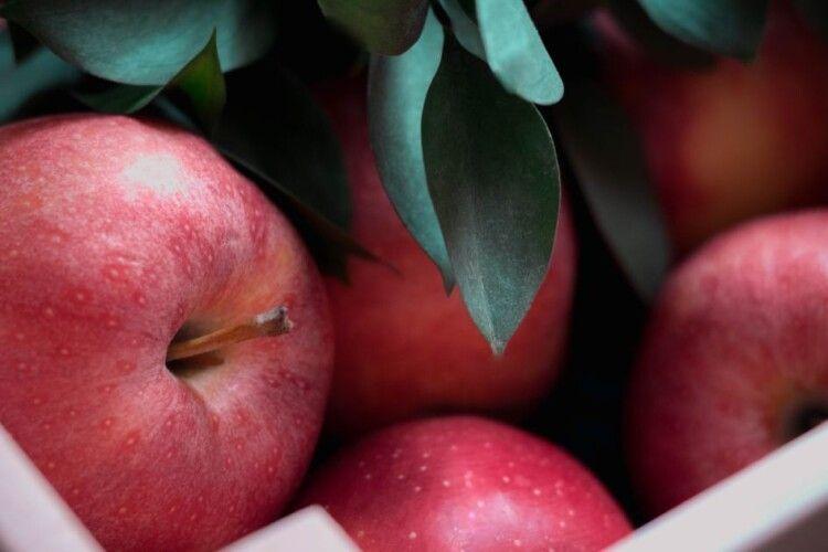 В Україні суттєво здорожчали яблука: скільки коштує фрукт