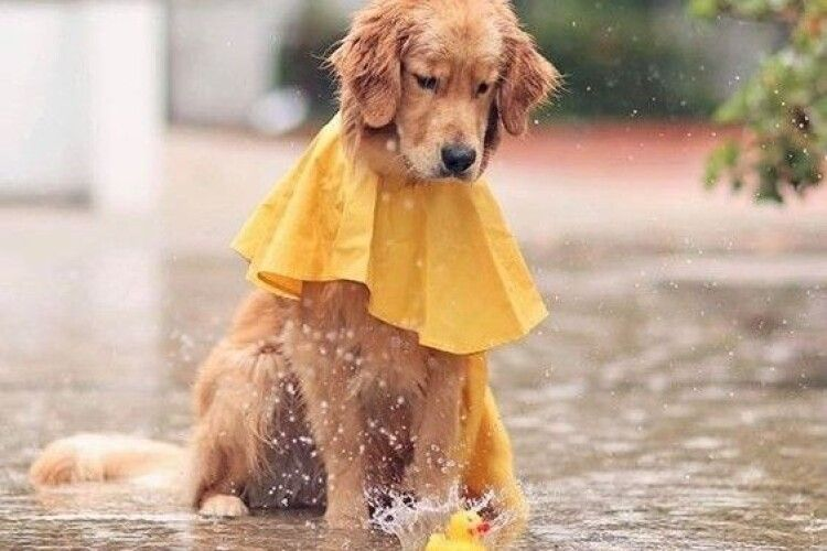 Погода на суботу, 30 травня: добряче дощитиме