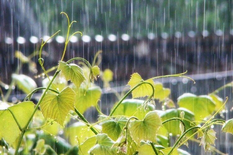 Погода на вівторок, 25 травня: майже літнє тепло під пориви південного вітру