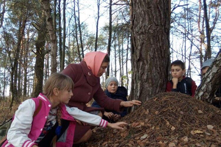 Бихівські юннати вивчали життя мурах (фото)