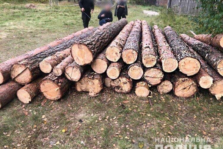 У Сарненському районі лісокрадуни зрізали й вивезли дев'ять сосон (Фото)