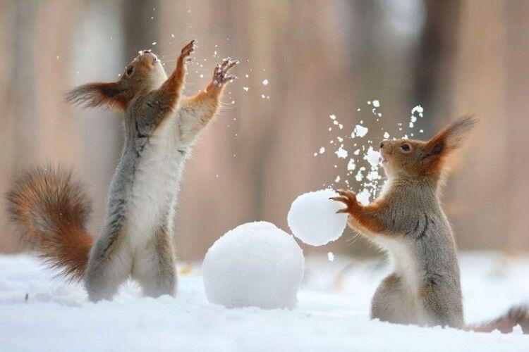 Погода на п'ятницю, 12 лютого: морозище і сніг