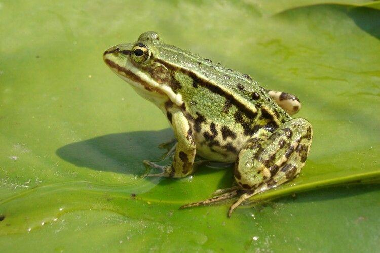 Суд постановив: виселити... зі ставка жаб