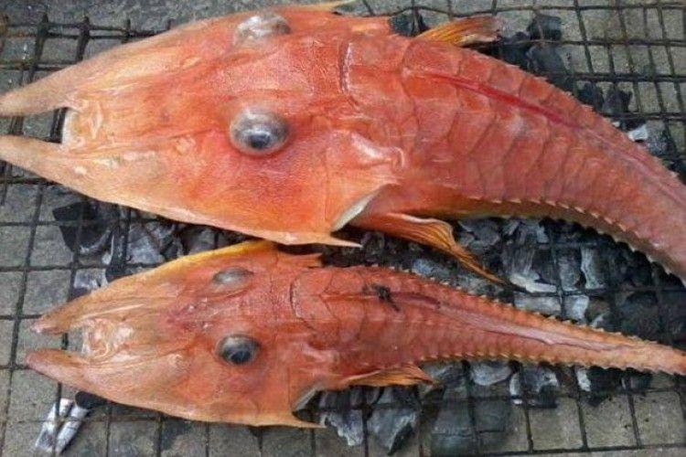 Червоне, головате й вусате – рибалки натрапили на «морське чудовисько» (фото)