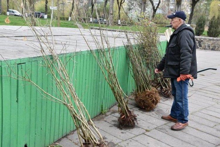Сьогодні у центральному парку культури та відпочинку імені Лесі Українки садили дерева (фото)
