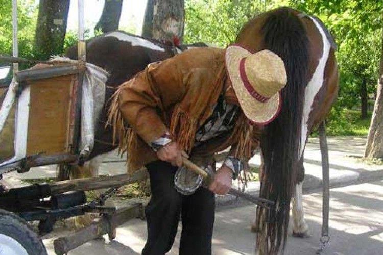 Здорове копито – запорука працездатності коня