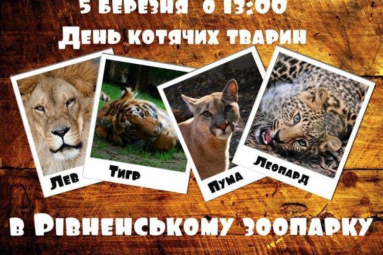 Сьогодні у Рівненському зоопарку – Міжнародний день котів!