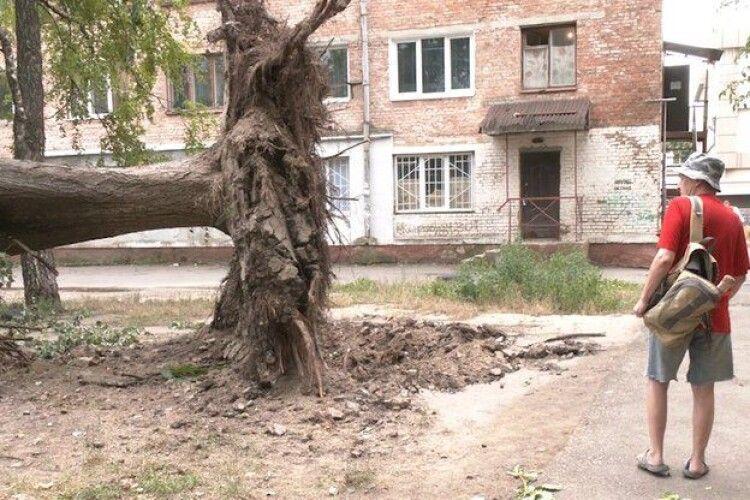 У Рівному під час негоди біля будинку вирвало з корінням п'ять дерев