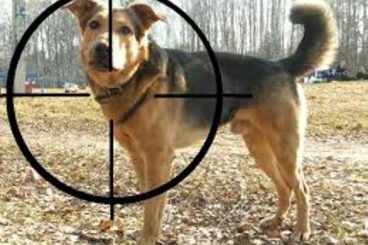 Поліція знайшла юних садистів, які знущалися над собакою на Львівщині: 16-річний парубок і 14-літня дівка