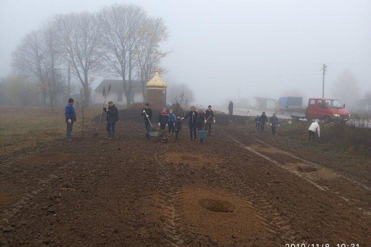 У селі на Горохівщині вандали викорчували молодий садок, який висадили небайдужі мешканці (Фото)