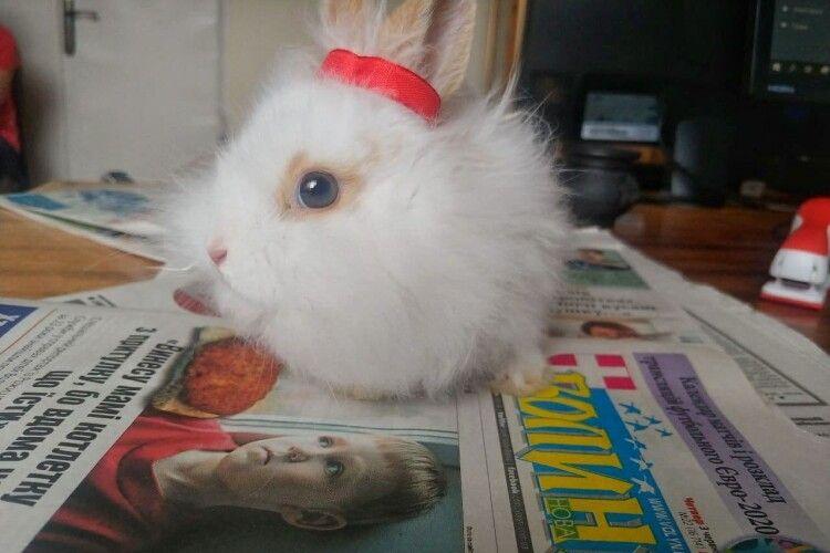 Кролик збирається судитися з «Газетою Волинь» (Фото 18+)