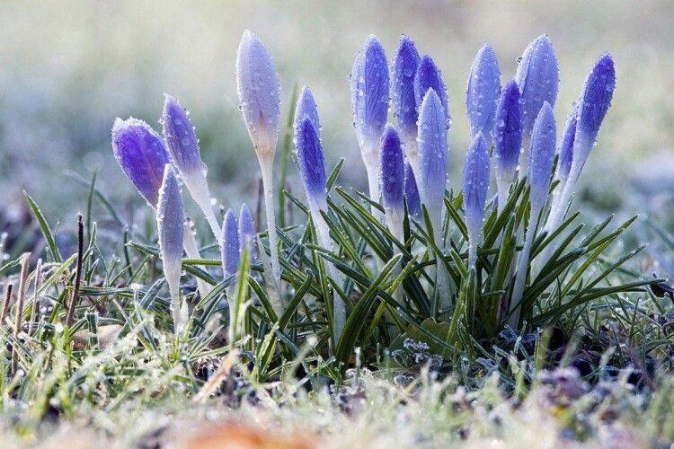 Погода на п'ятницю, 19 березня: вночі на Волині до 7⁰ морозу