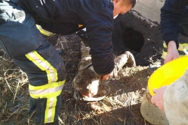 Рятували як могли: однорічна дитина впала у вуличний туалет (Фото)