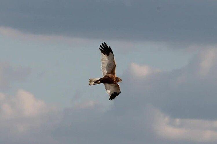 Рівненська фотохудожниця за два дні зафіксувала понад 20 видів птахів