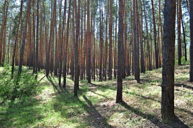 На Волині 40 гектарів лісу незаконно перевели в сільськогосподарську землю