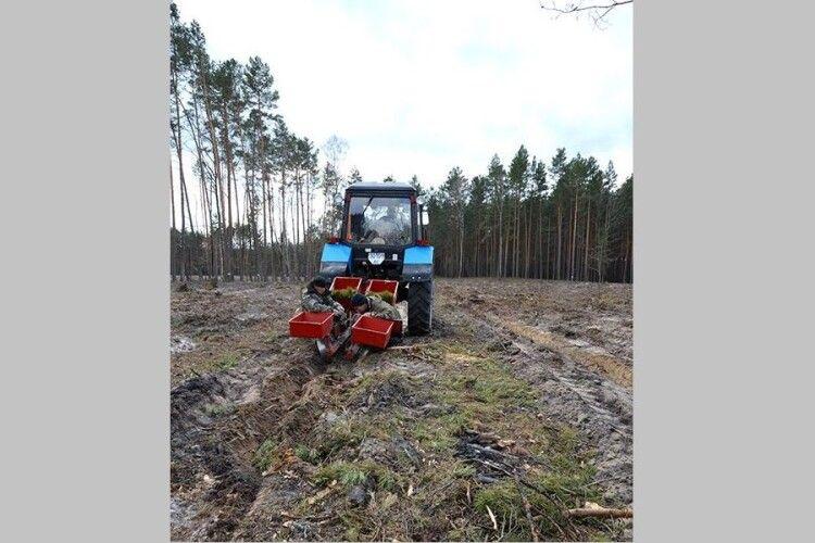 На Волині ліс садять механізовано (Фото)